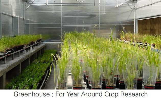 Unique ways to build soilless cultivation at home