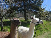 Notre hameau de Valoan, vue d'un drone--------------------------------Balade avec les lamas