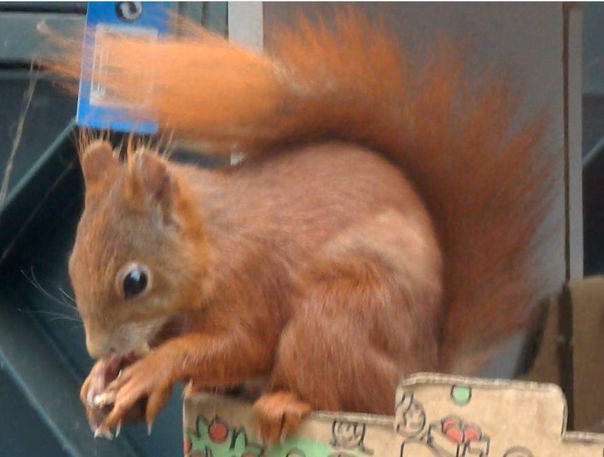 Visiteur insolite: un petit écureuil