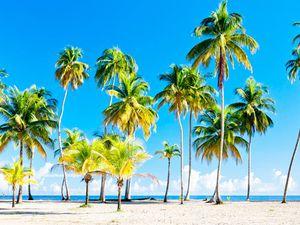 """"""" Les plages paradisiaques, sable fin, l'évasion et du rum ça donne envie de voyager ?"""