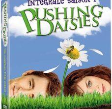 La saison 1 de Pushing Daisies sort en dvd