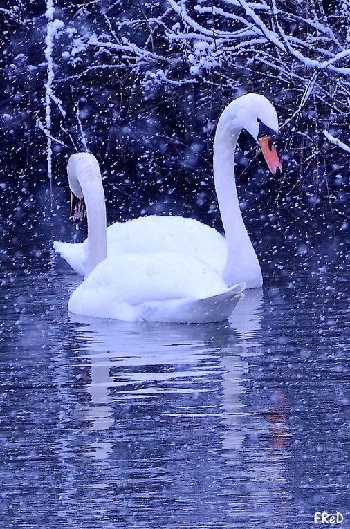 Promenade hivernale, sous la neige, dans Bussy ce matin...