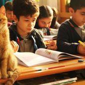 Un chat errant entre dans une classe et transforme la vie de ces élèves en décidant d'y rester - Animaaaaals