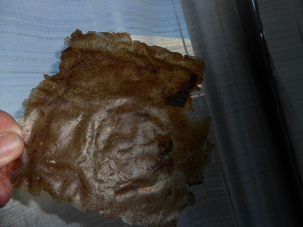 Rien n'est jamais acquis , voilà je croyais en savoir sur l'amadouvier papetier et hier surprise !!!!! Au lieu d'un papier tonique opaque , texture cuir , j'ai obtenu une pâte gelatineuse impossible à presser donnant  un papier translucide parfois très fragile. Est ce son séjour au congélateur ????? Expérience , expérience !!!!!!