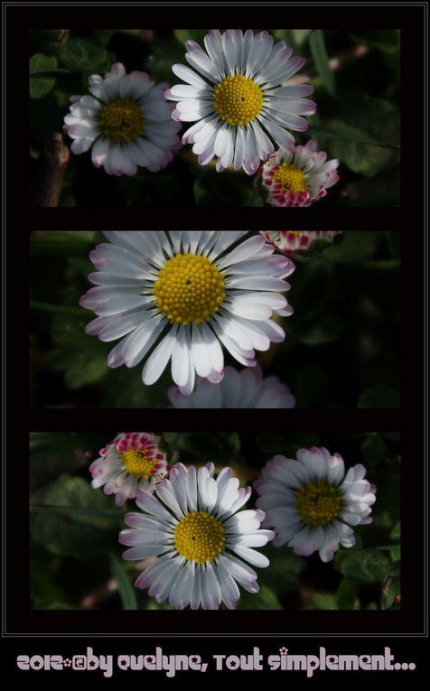 J'utilise Picasa principalement, mais j'utilise aussi parfois  Photoscape..