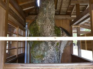 Préf. de Nara: L'immense sanctuaire Kashihara Jingû 橿原神宮