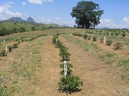 Brasil and the vine of South America