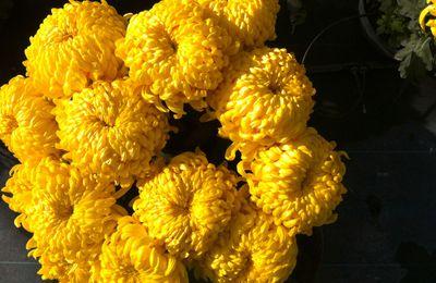 Automne et chrysanthèmes