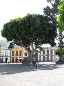 Quittez Las Palmas, Oubliez la mer, perdez vous sur les routes sinueuses du Centre de GC: des villages superbes vous attendent, sans touristes!