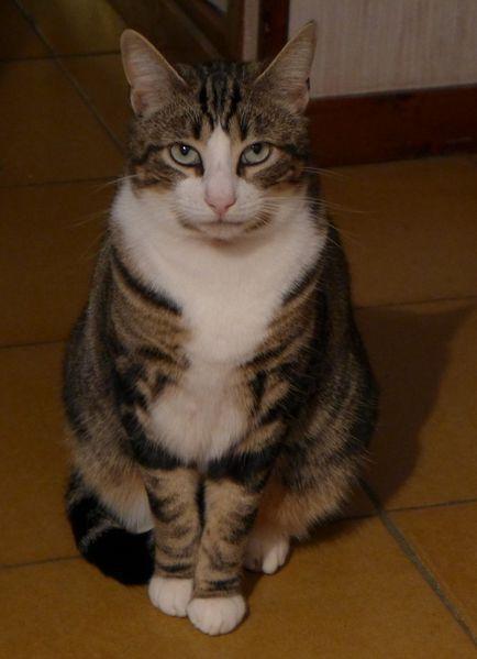 Il y a un an, Squirel est parti au Paradis des chats...