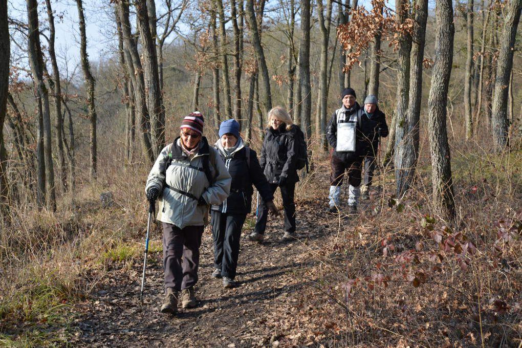 Sortie journée du 19 janvier 2017 forêt de Rougeau