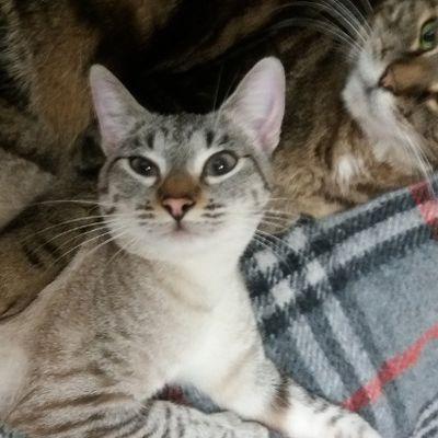 Isis, jeune chatte torturée : protection animalière, cruauté envers les animaux, maltraitances animales, application des lois pour animaux