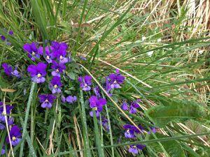 Une flore exceptionnelle qui regroupe un nombre considérable d'espèces