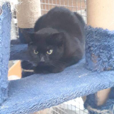 Elle est adoptée !!! : BOUBA, petite chatonne stérilisée de 6 mois