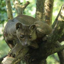 Reserva zoológica de Calviac