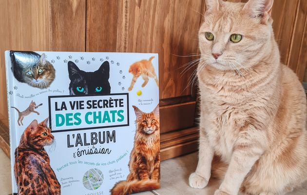 Album : la vie secrète des chats