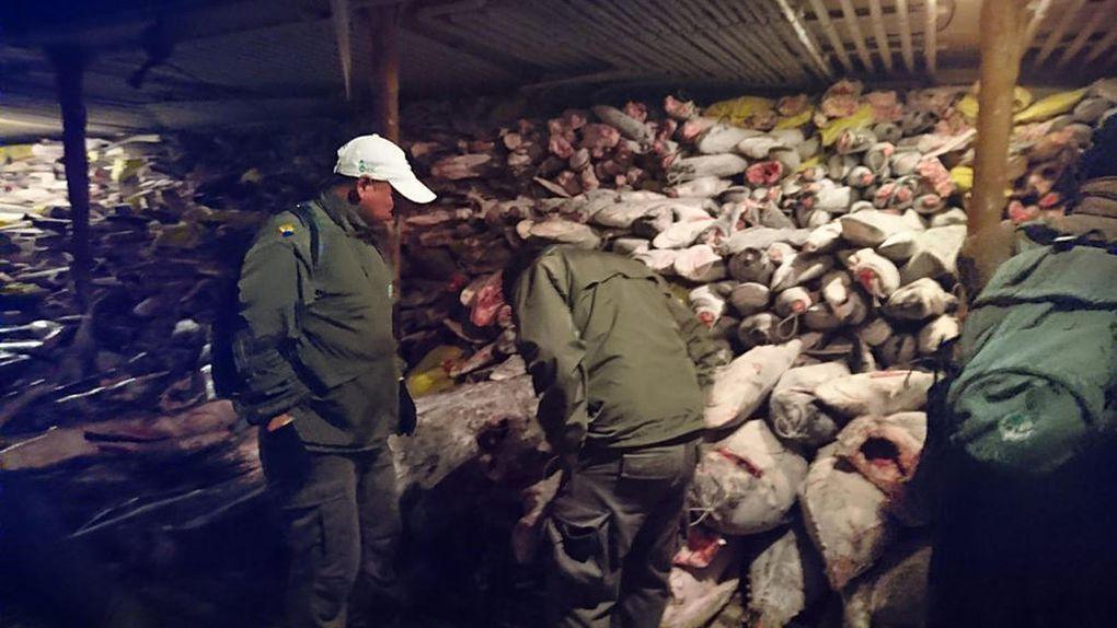 Un navire chinois saisi aux Galapagos pour 300 tonnes de pêche illégale