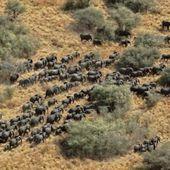 Aucune espèce à l'abri en cas de phénomène d'extinction massive