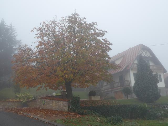 Dans le brouillard !