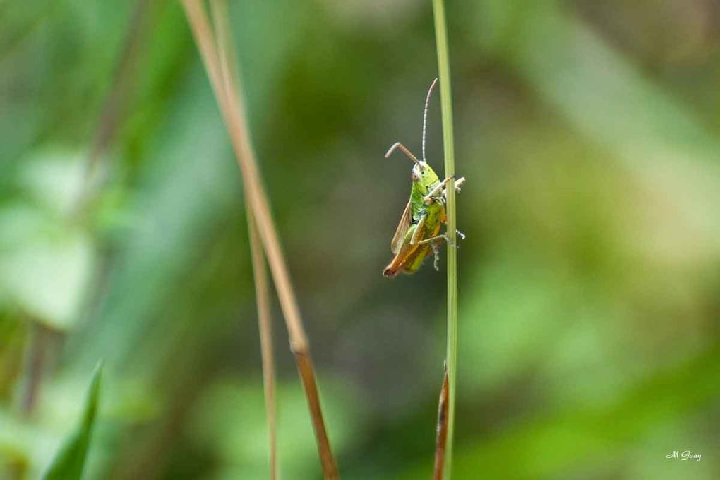Une de mes passions: la macrophotographie. Ce petit peuple qui se dissimule sous les herbes, les feuilles ou se montre sous les rayons du soleil, c'est la vie.  Sachons préserver cette petite faune en laissant des friches où l'action humaine est in