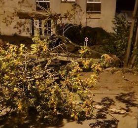 Un arbre est tombé rue de la Société Française