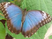 Que signifie votre rêve ? Papillon