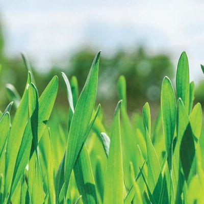 Covid 19 Impact On Biostimulant Market