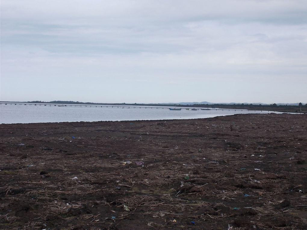 le parc, la lagune, la plage, aigrettes blanches et garzettes, le centre de Lushnjé.