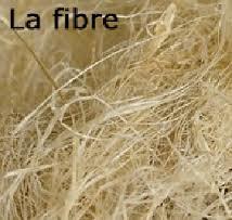 le chanvre :  fleur, fibres..., tissu.