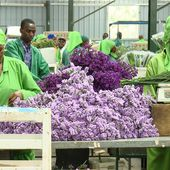 Kenya's flower industry threatens country's fisheries | DW | 06.02.2018