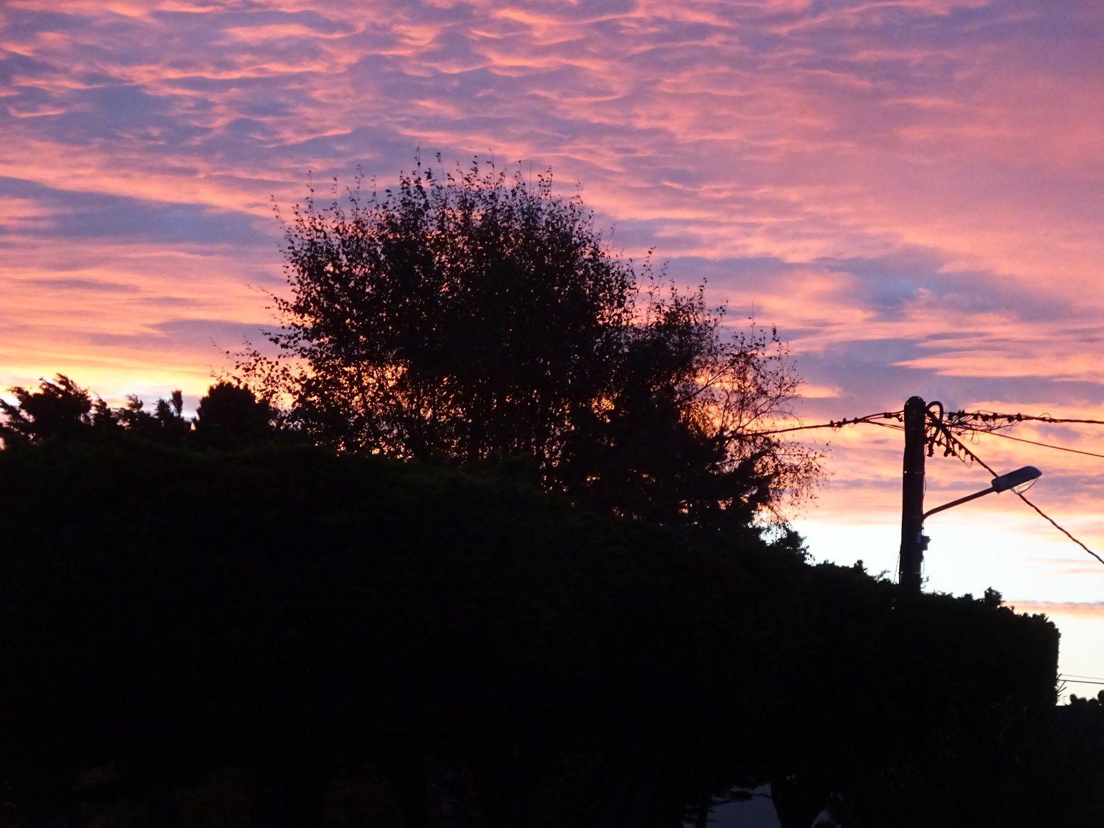le jour se lève , les chèvres (confinées) coucher de soleil