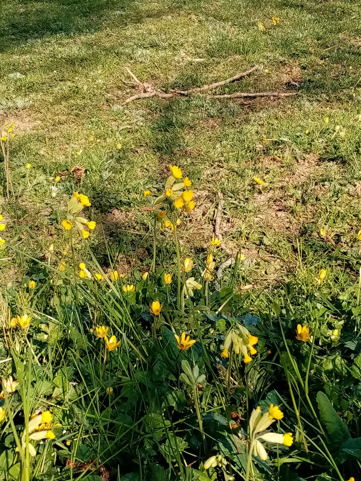 Poisson d'avril !