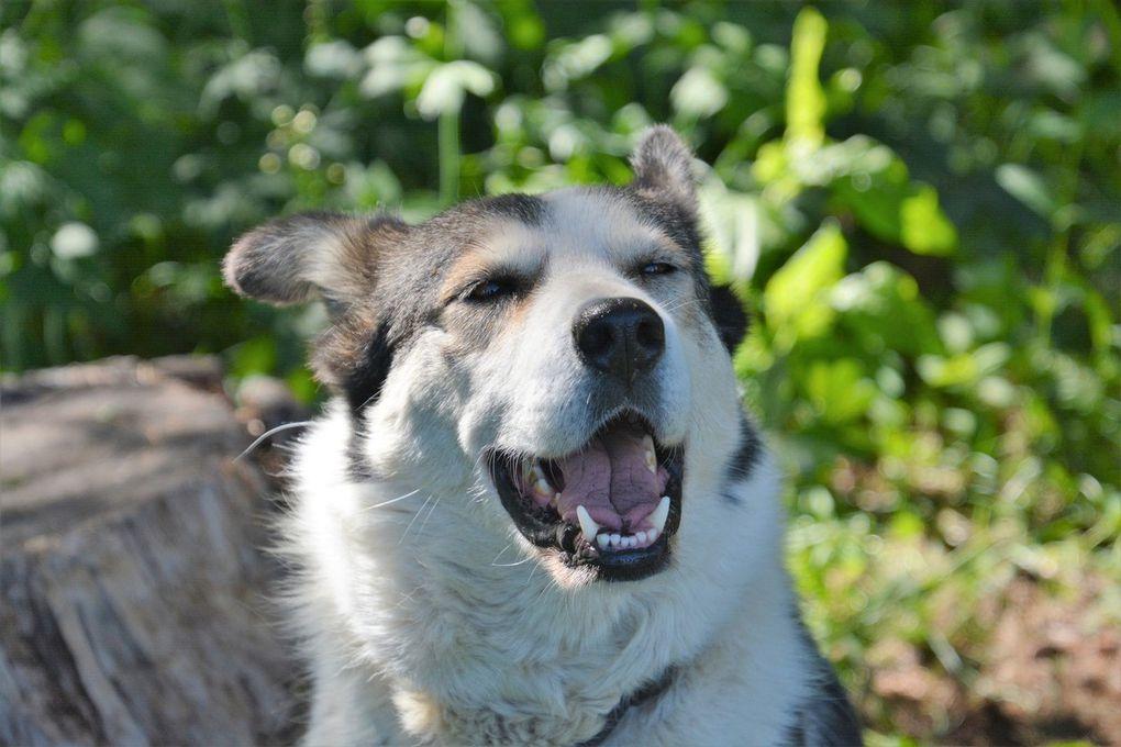 J'étais avec Toundra, une chienne très affectueuse.