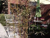 Peindre des bambous