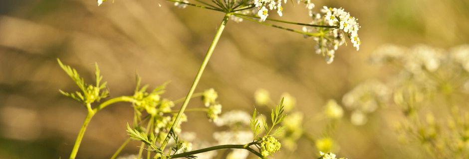 Pourquoi consulter en naturopathie ?