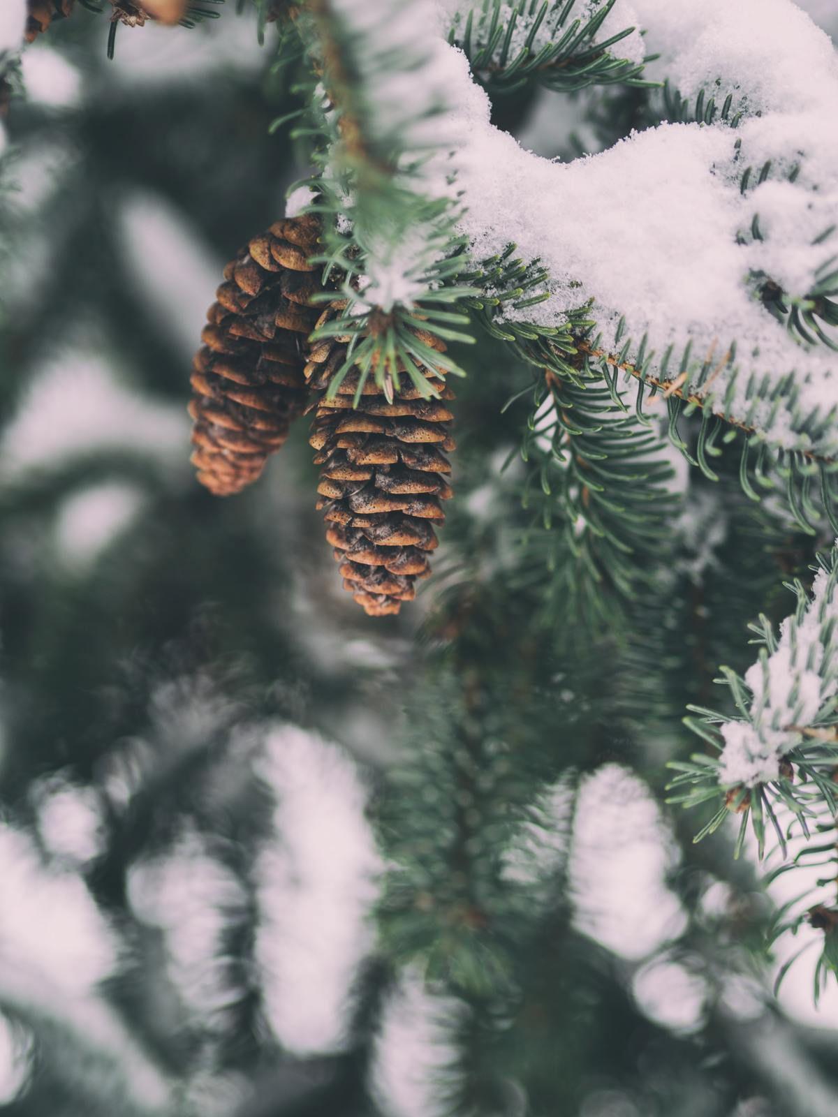 Mieux appréhender le froid hivernal