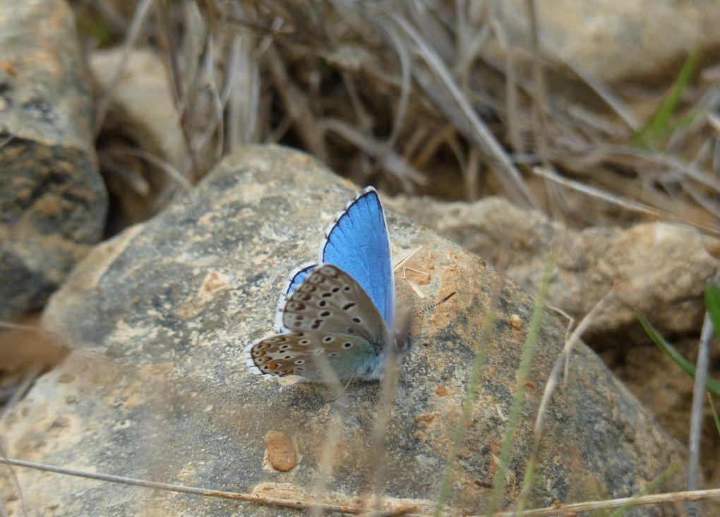 Balade en quête de papillons à Mauressargues avec l'Œil Vert et Gard Nature