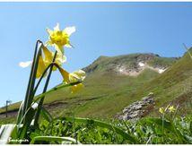 Randonnées sur les traces des volcans d'Auvergne