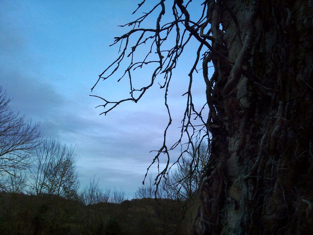 Album - hiver-2011