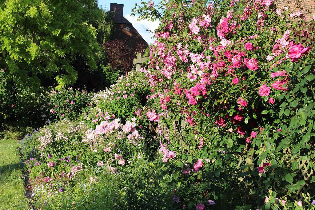 Un festival de roses