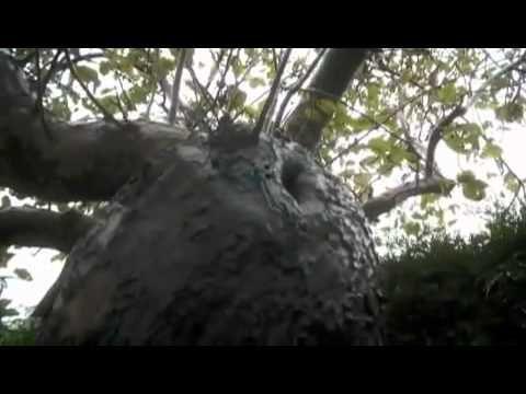 elfe, fée élémentaux réels filmé dans la nature...