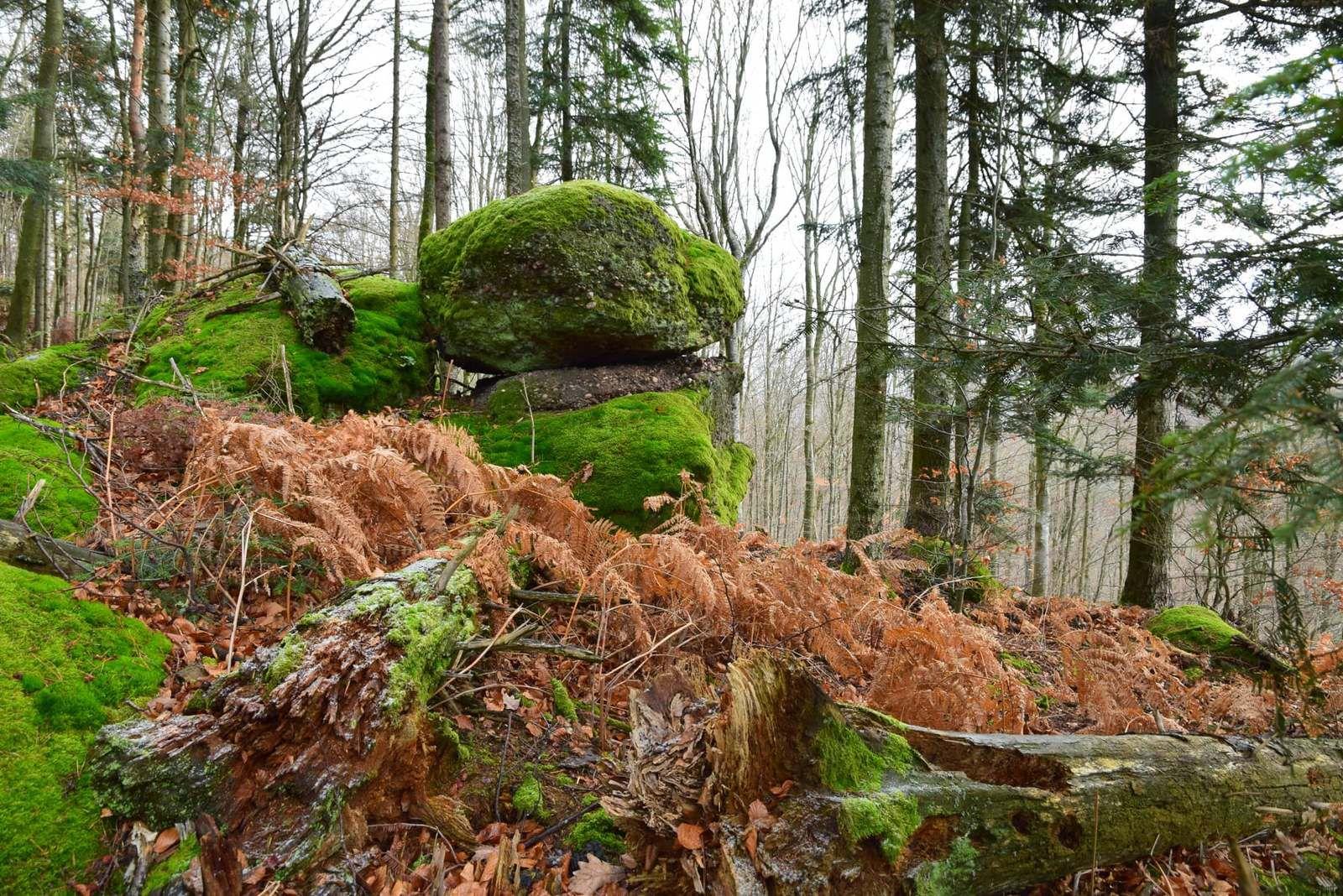 Premiers frimas sur le Schweizerberg