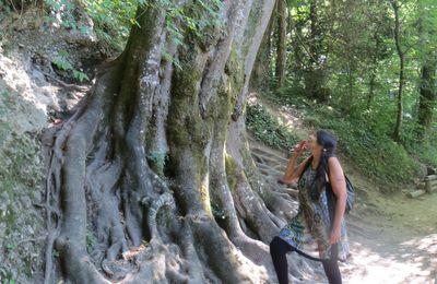 de beaux arbres aux gorges du Fier