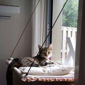 Un petit coin douillet pour le chat - Magazine Avantages