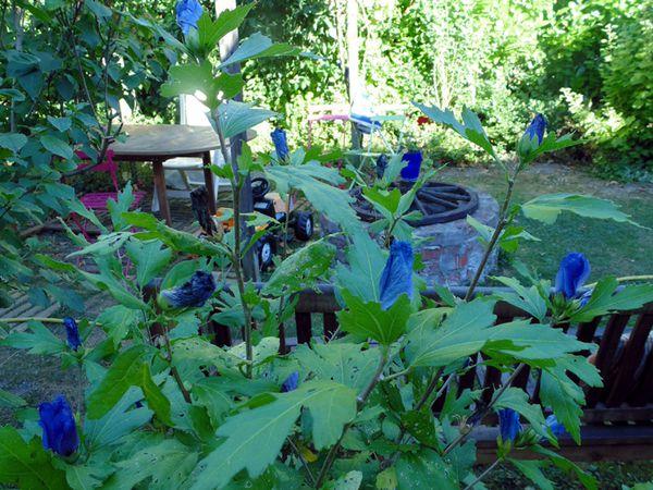 #LundiSoleil : du bleu chez moi
