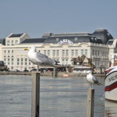 Photo du jour - Oiseaux -