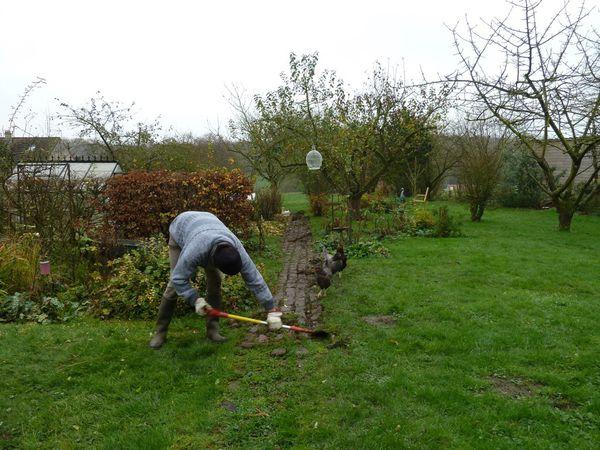 travail au jardin avec les poules