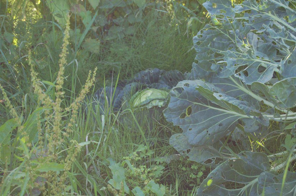 Album - Nature-et-jardin-7
