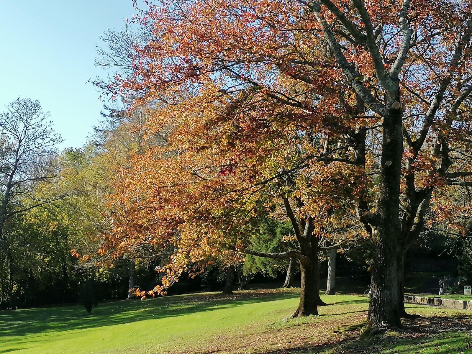 Lumières d'automne
