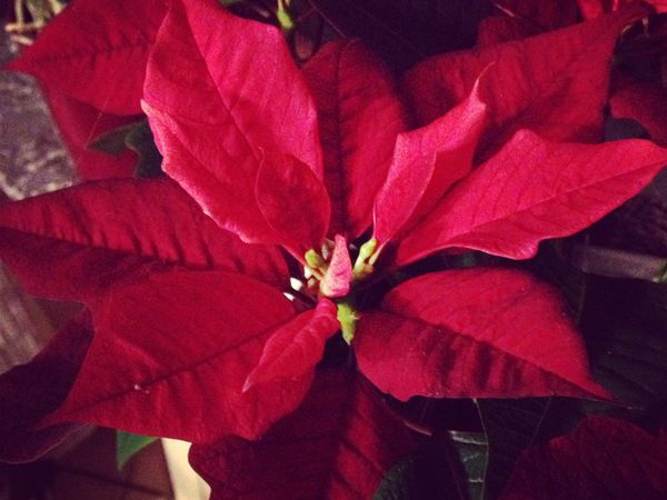 Photo a day / December 2014